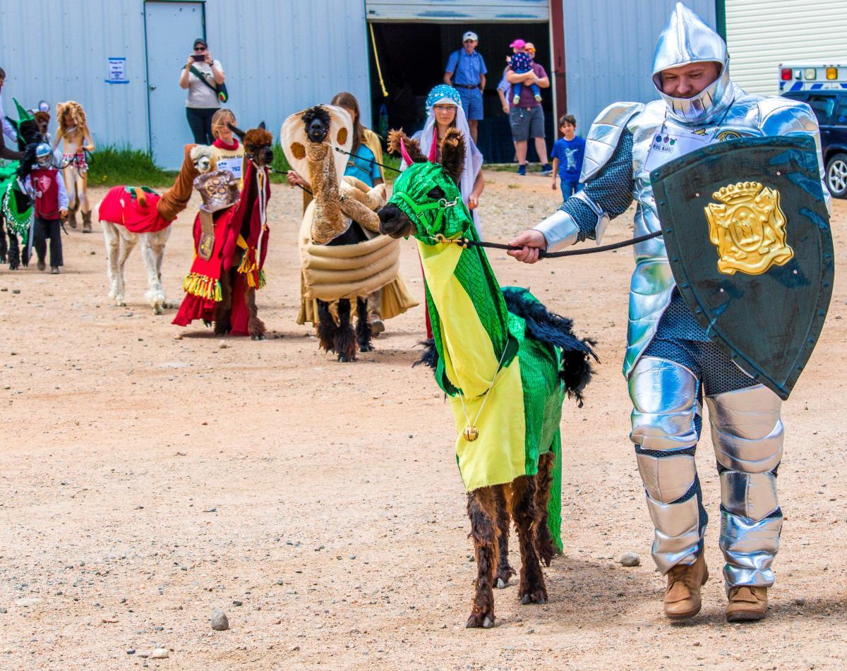 wool market costume contest