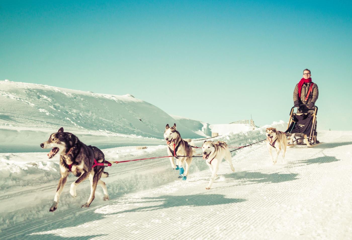 Man dog sledding