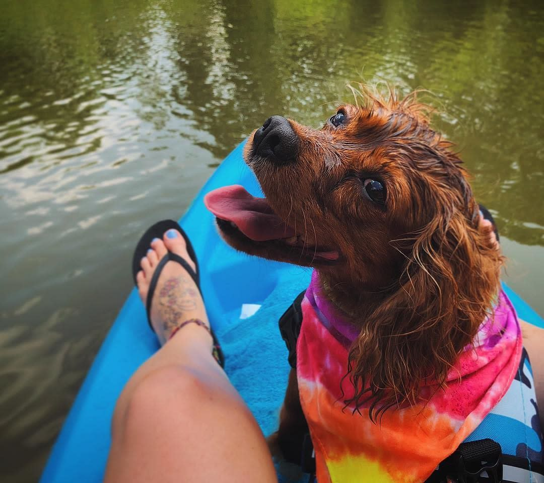 Dog and owner kayaking on the St. Joseph River in Fort Wayne