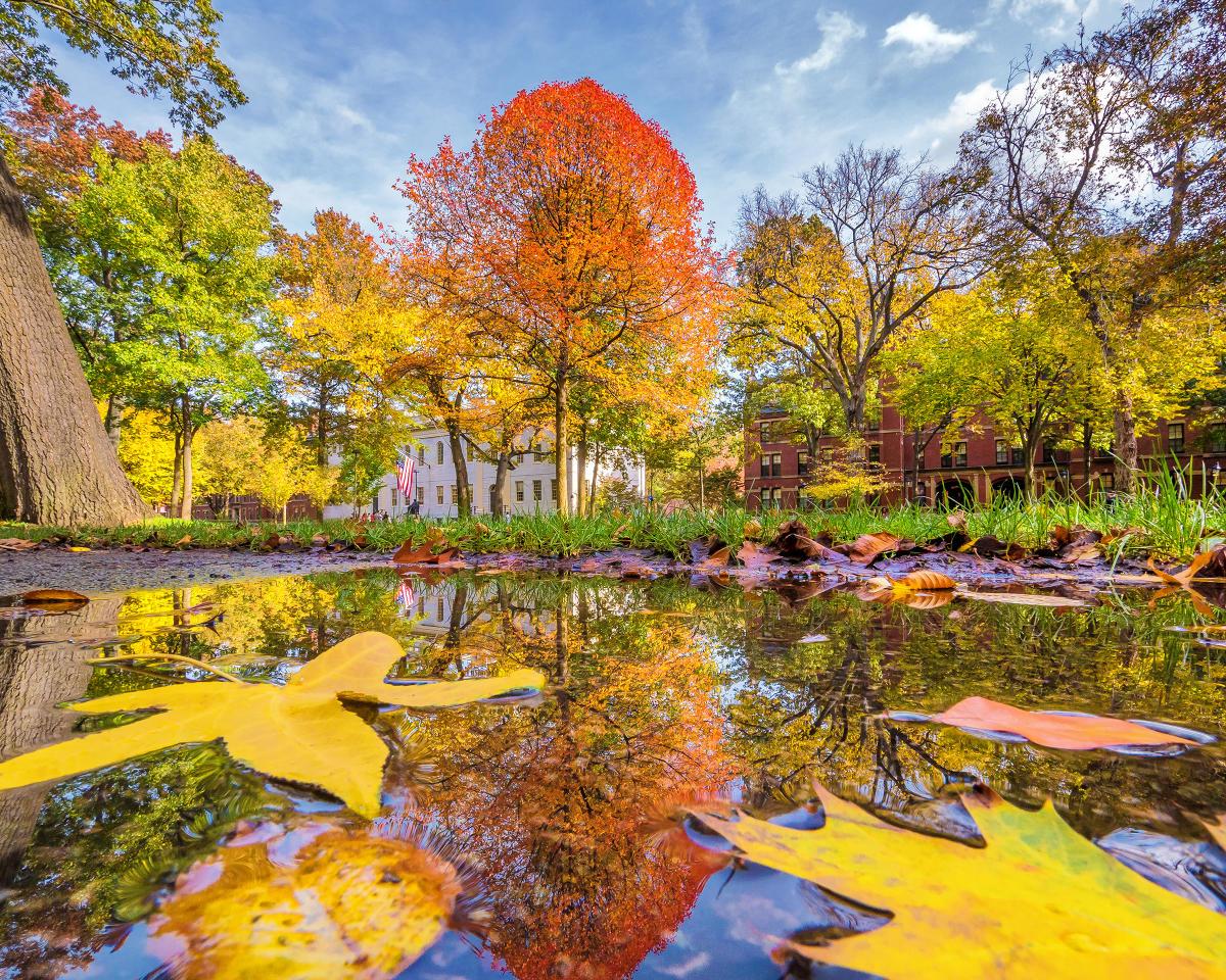 Harvard Square Foliage