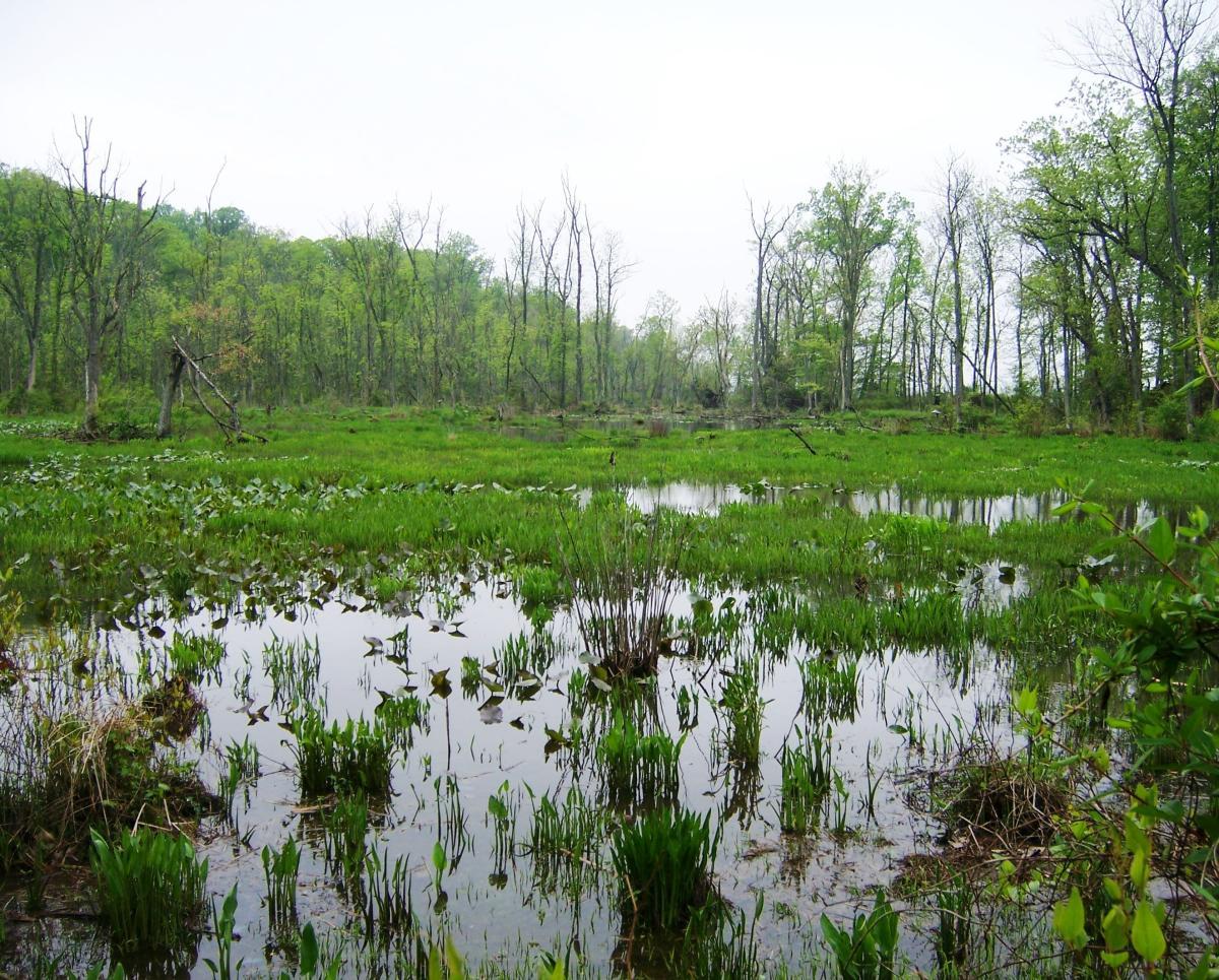 Mason Neck Wetlands