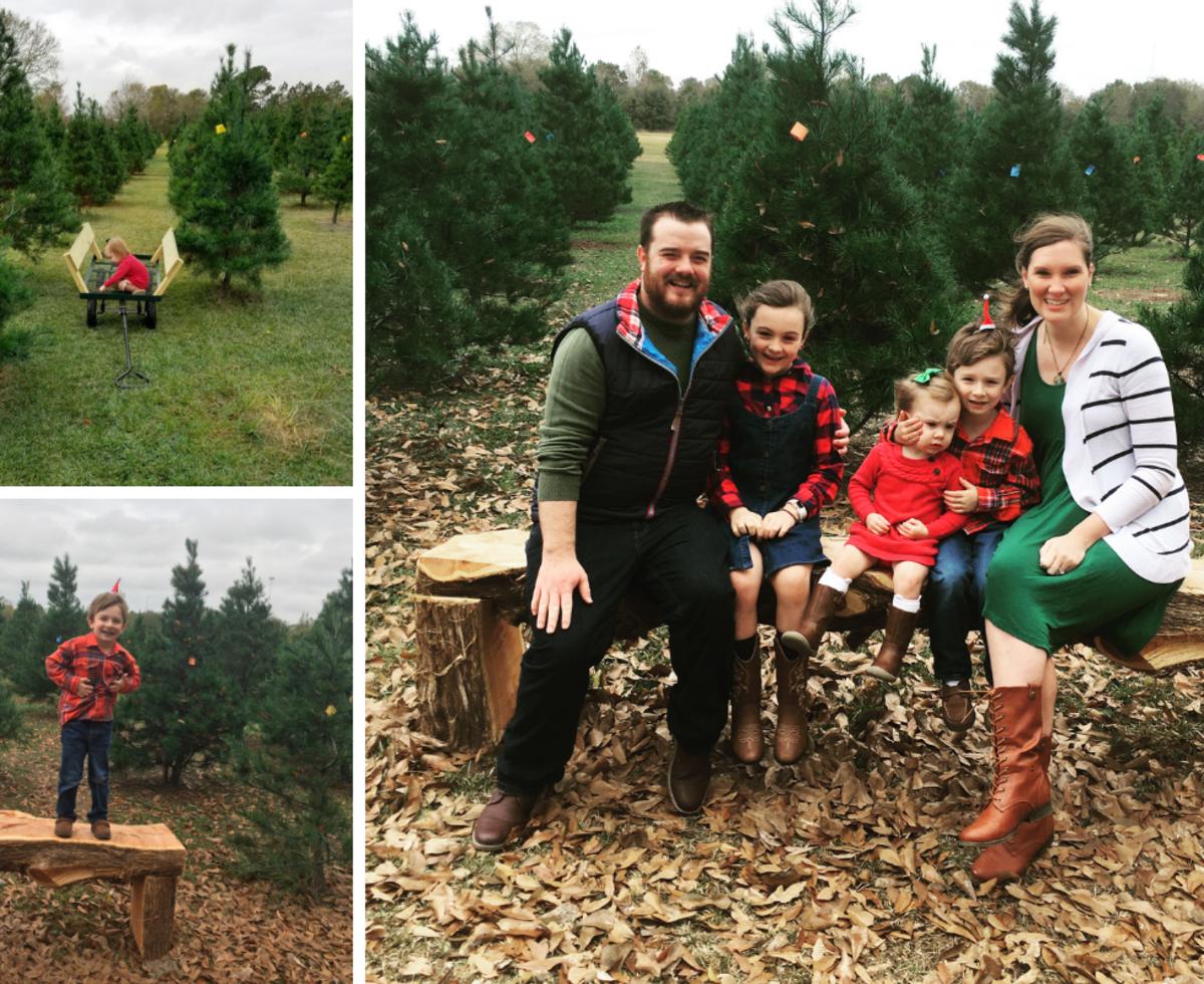Christmas Tree Farm M & M