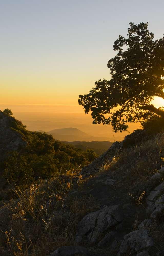 Golden sunset behind an oak tree