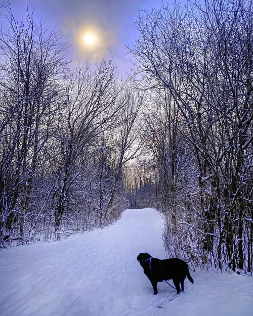 Ann Arbor trails in the Winter, with dog