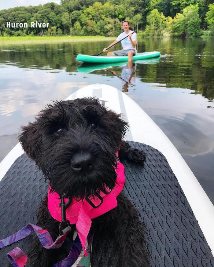 Dog on paddle board in Huron River