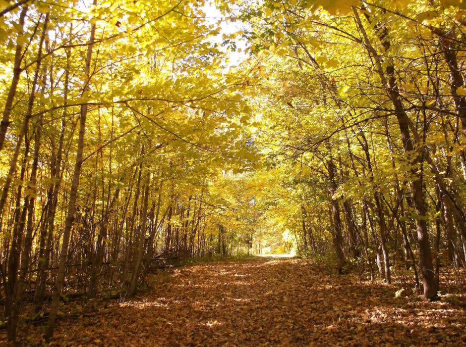 Trail covered in yellow leaves