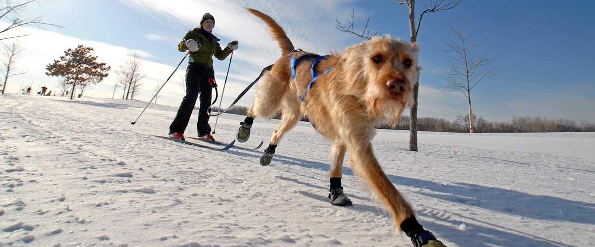 Skijoring