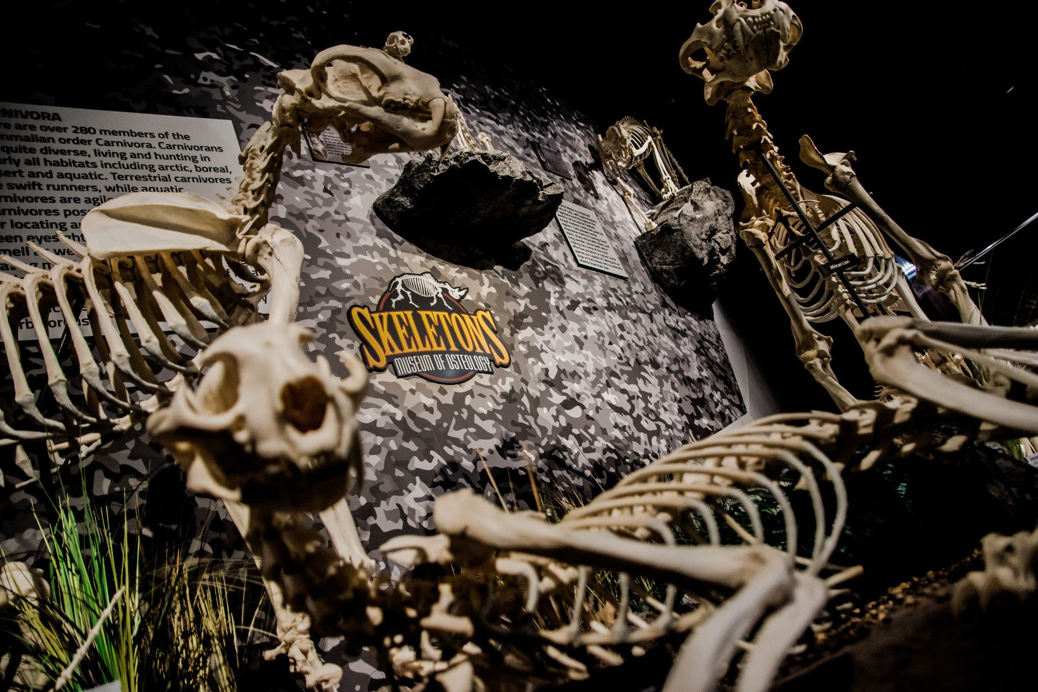 SKELETONS: Museum of Osteology in Orlando