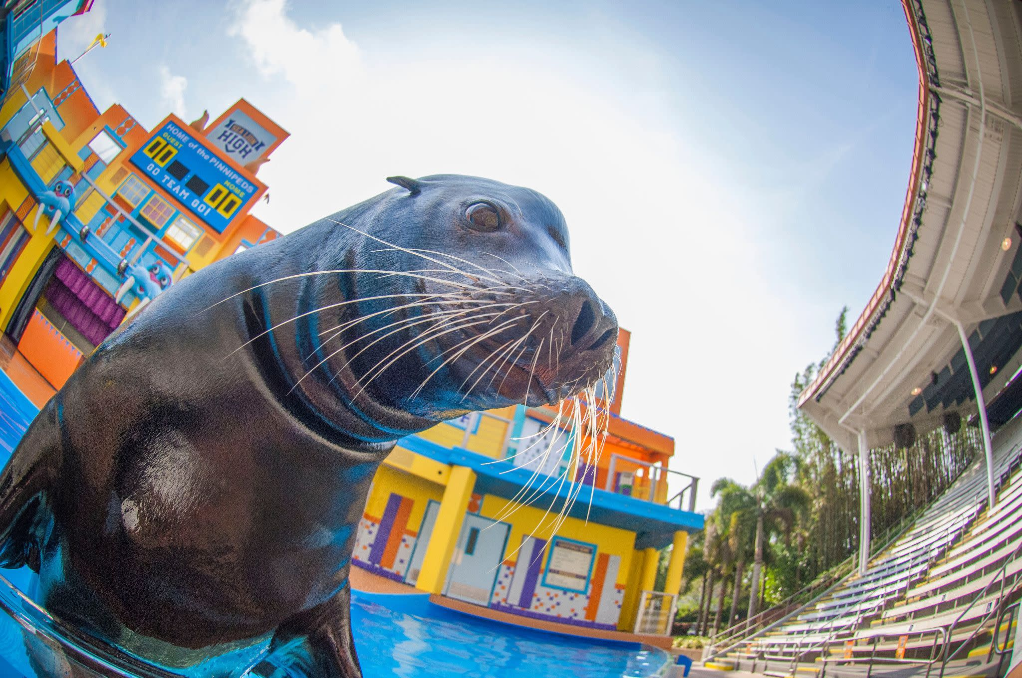 Sea Lion High at SeaWorld Orlando's Bayside Stadium