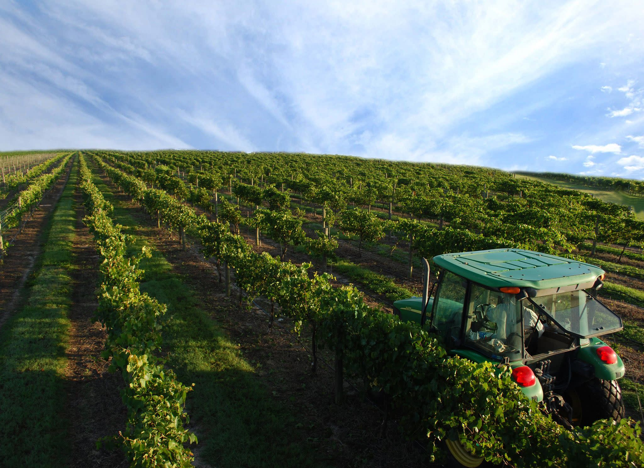 Lakeridge Winery & Vineyards in Clermont
