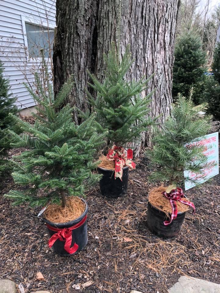 Mattern's Pine Ridge Nursery