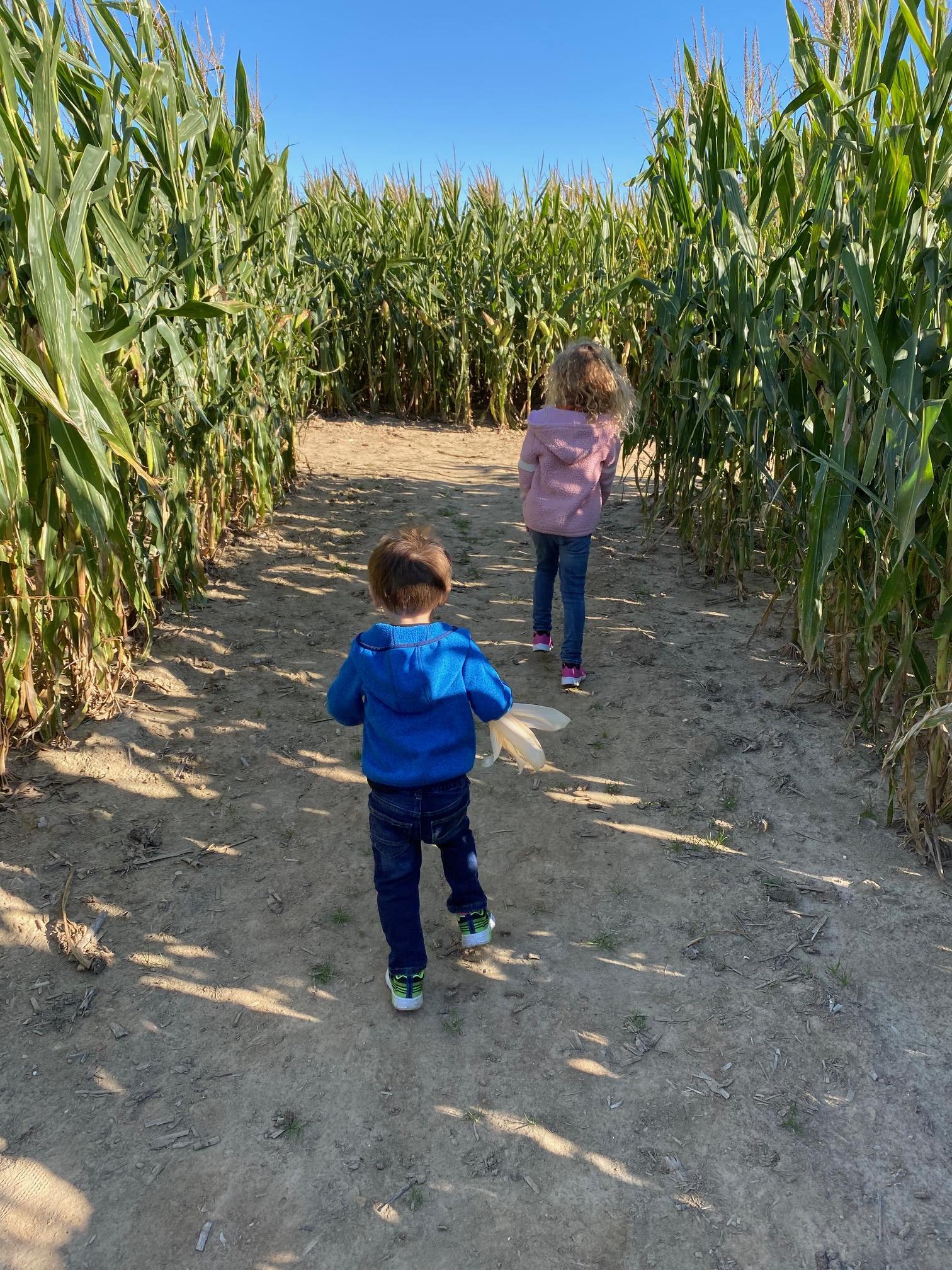 Kent's Cucurbits Corn Maze