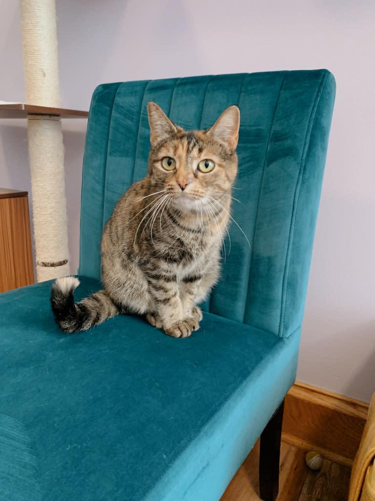 Lazy Cat Lounge