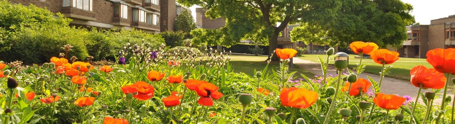 Grounds, view from North Court flower bed (Header image)