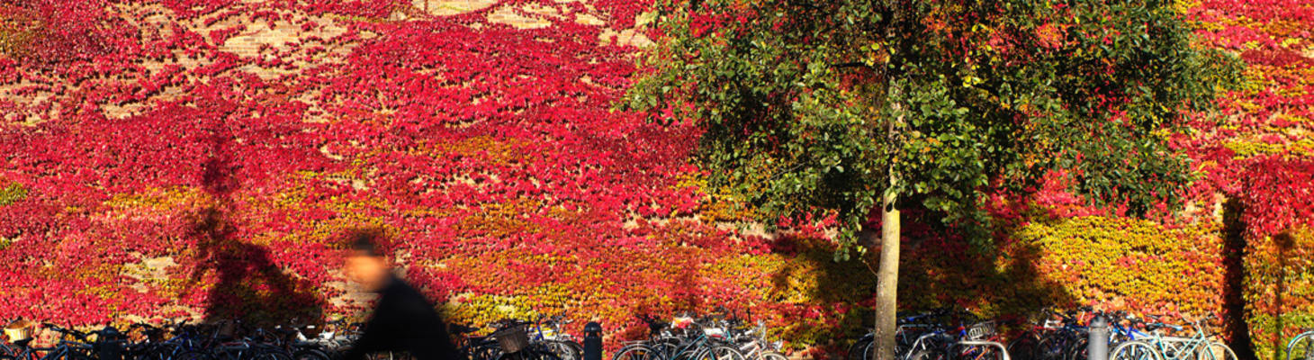 Bikes and Virginia Creeper (Header image)