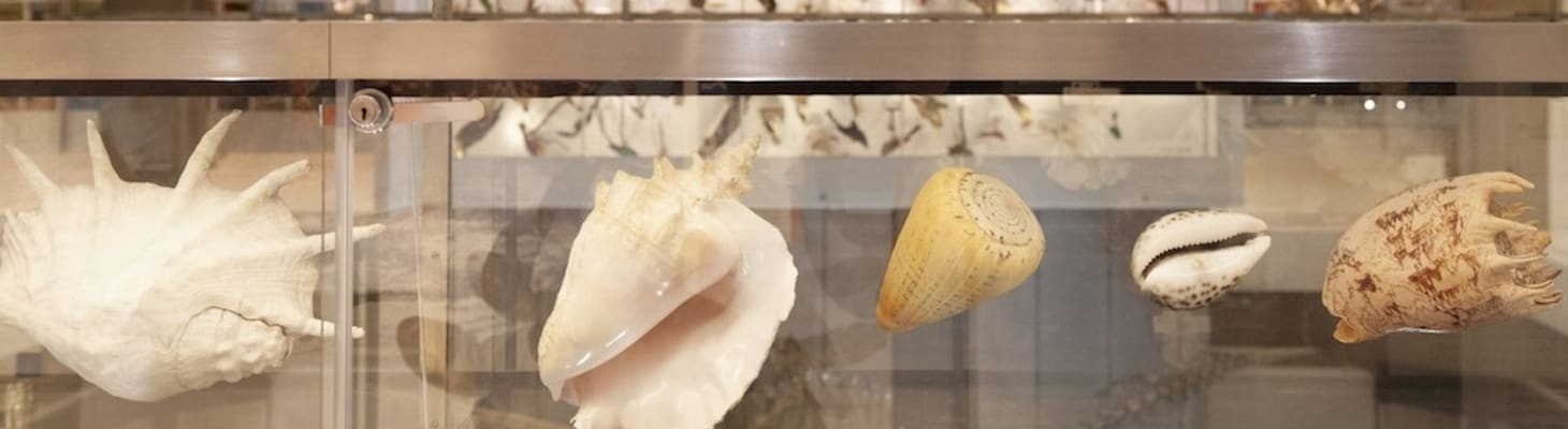Shells as part of a collection at the University Museum of Zoology, a spectacular venue for a drinks reception.