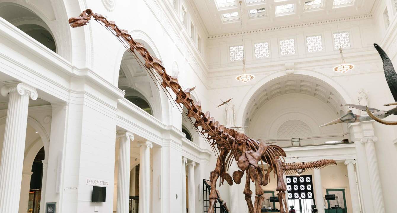 Maximo at Field Museum
