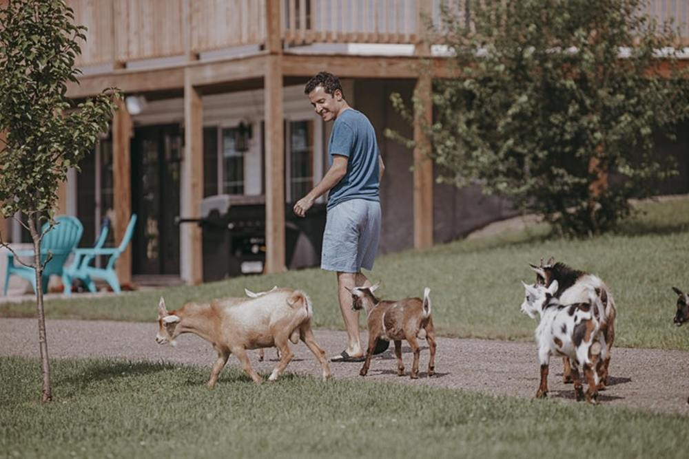 Man walking with goats