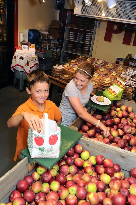Kids choosing apples from bins
