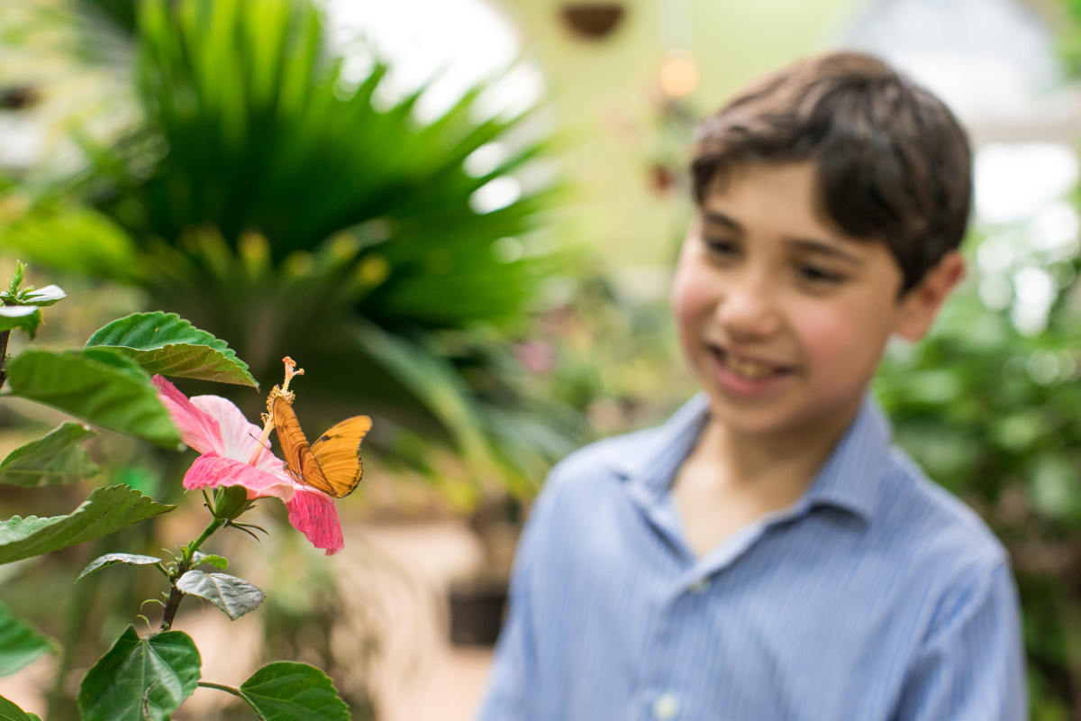 Child at Butterfly Conservatory