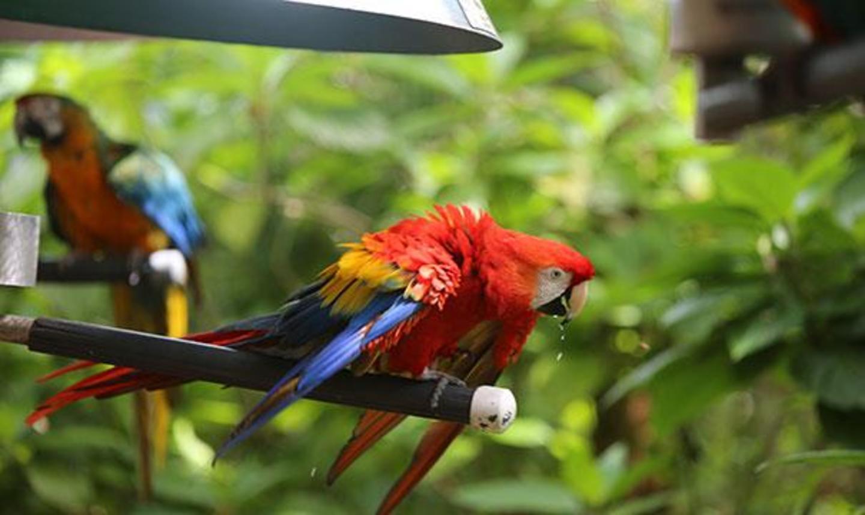 Jungle Island parrots dancing