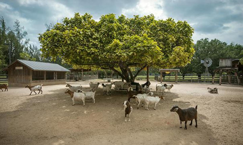 Farm Village goat area