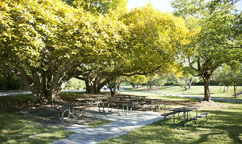 Greynolds Park Picnic Area