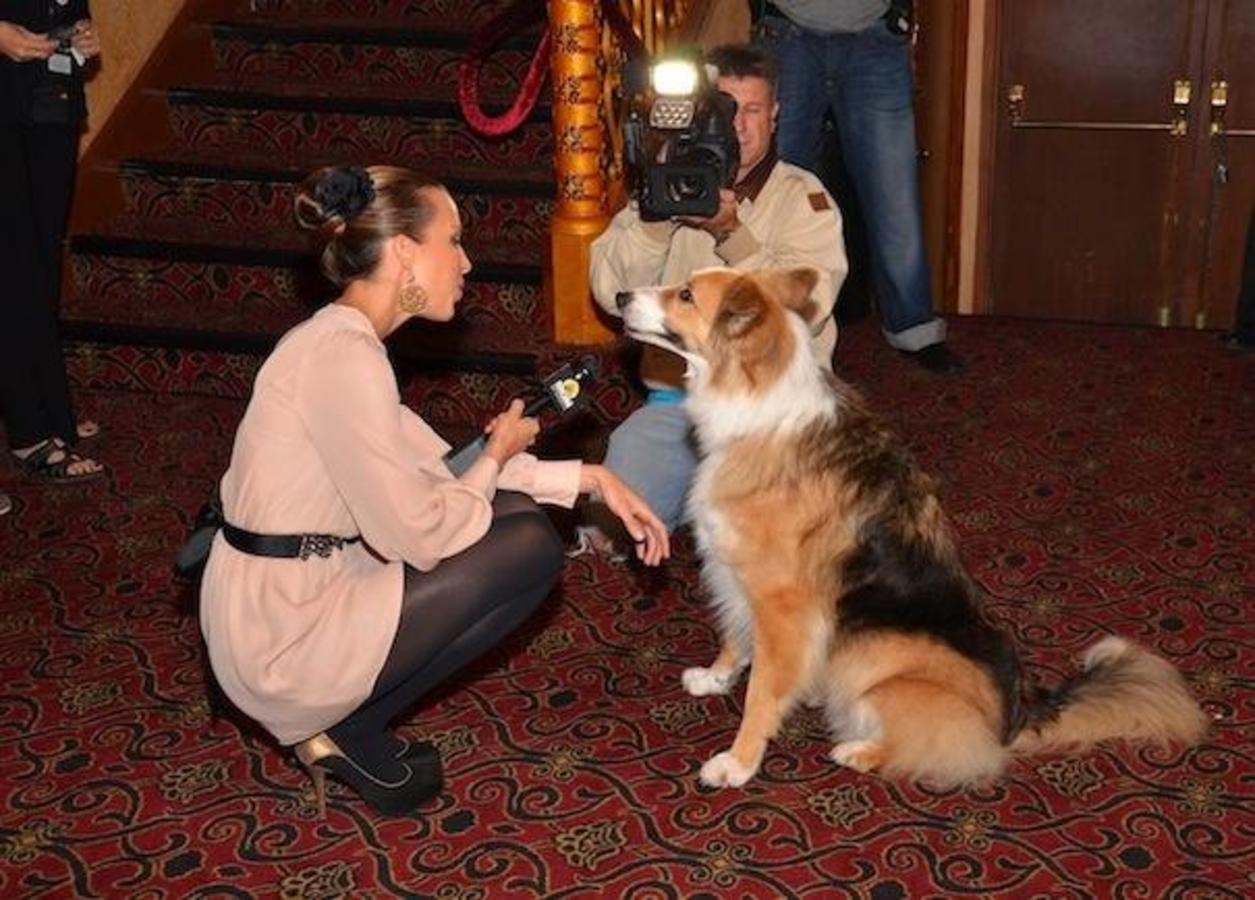 Darling Companion canino attore intervistato da MGM