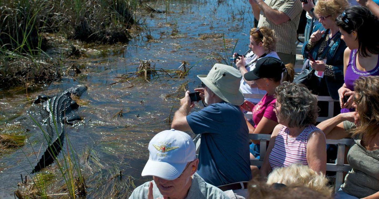 De cerca en los Everglades