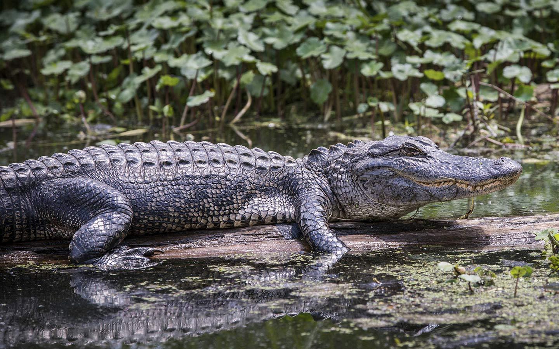 Everglades VIP Tour