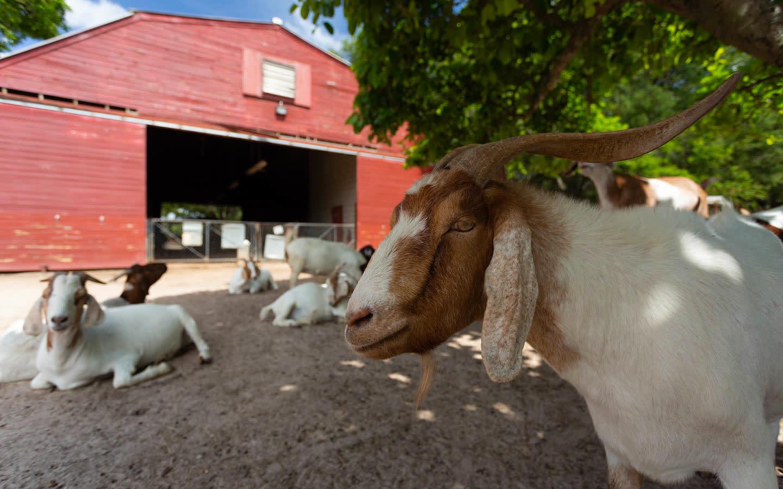 Amelia Earhart Park Petting Zoo