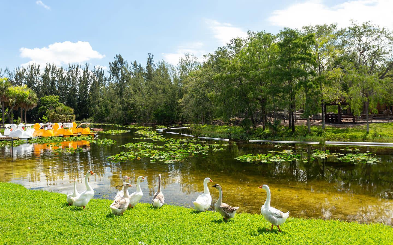 Amelia Earhart Park Paddle Boat Lake