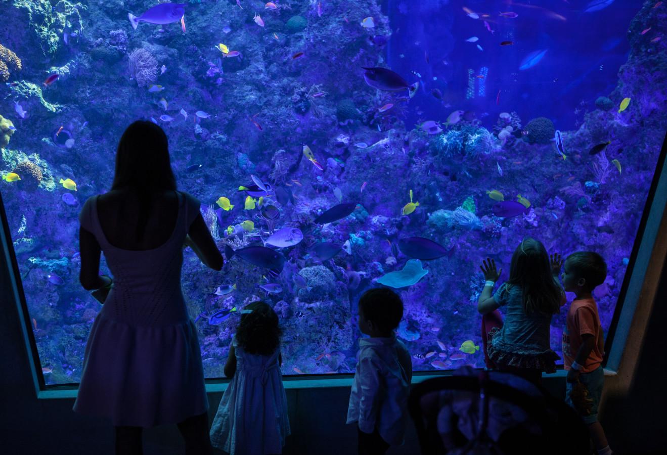 Dive Leve- Aquarium