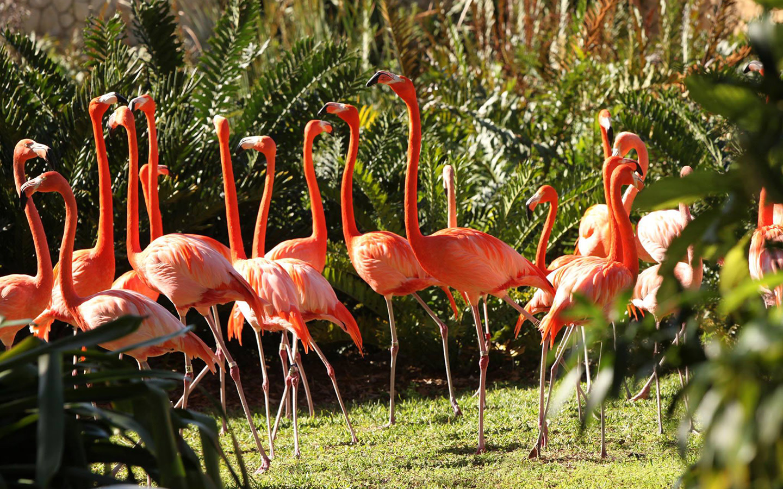 Vibrant pink flamingos