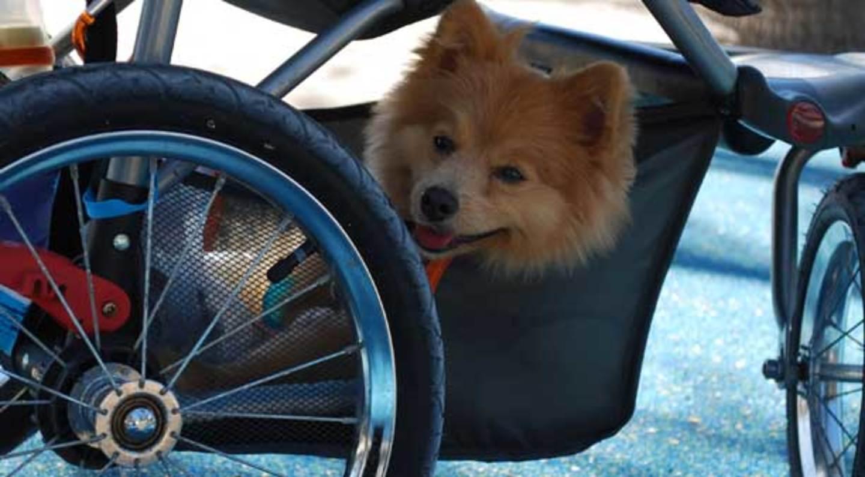 Corriendo con el perro (Boo) en Lummus Park