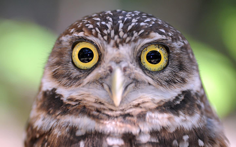 Zoo Miami Owl