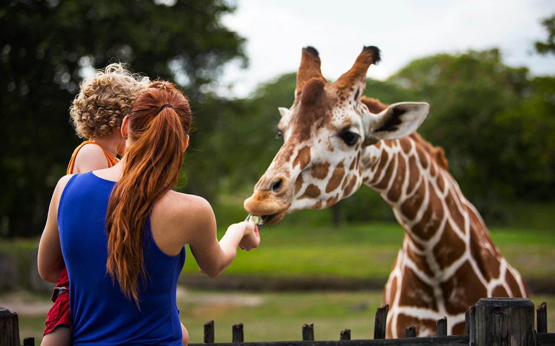 Zoo Miami's Samburu Giraffe Feeding Station