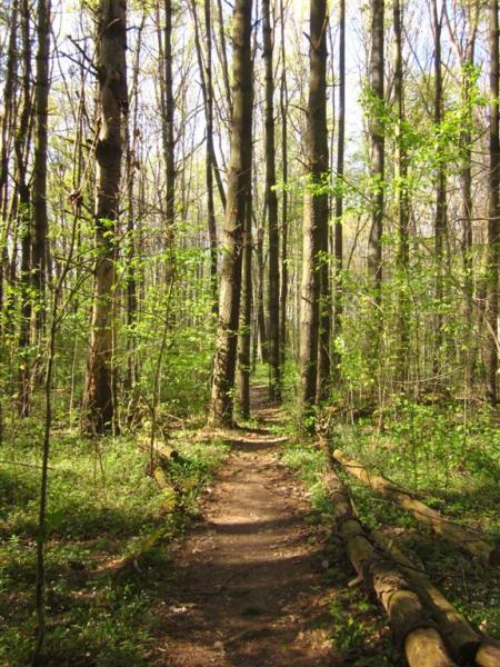 Decatur State Forest
