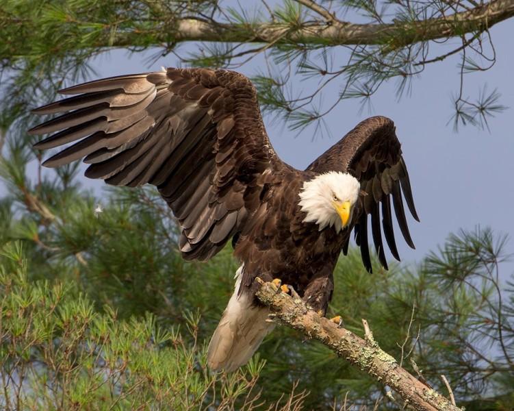 Delaware Otsego Audubon Society Sanctuary