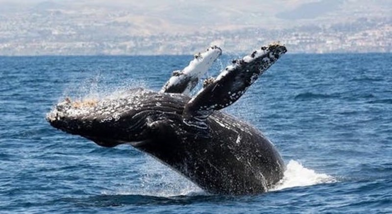Private Whale Watching Charter