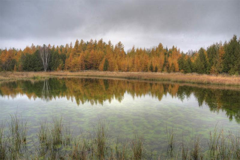 Three Springs Nature Preserve