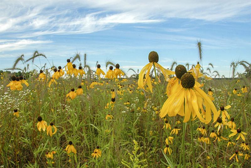 Oak Road Nature Preserve