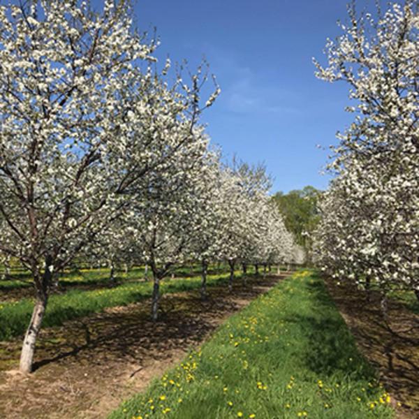 Soren's Valhalla Orchards LLC (1)
