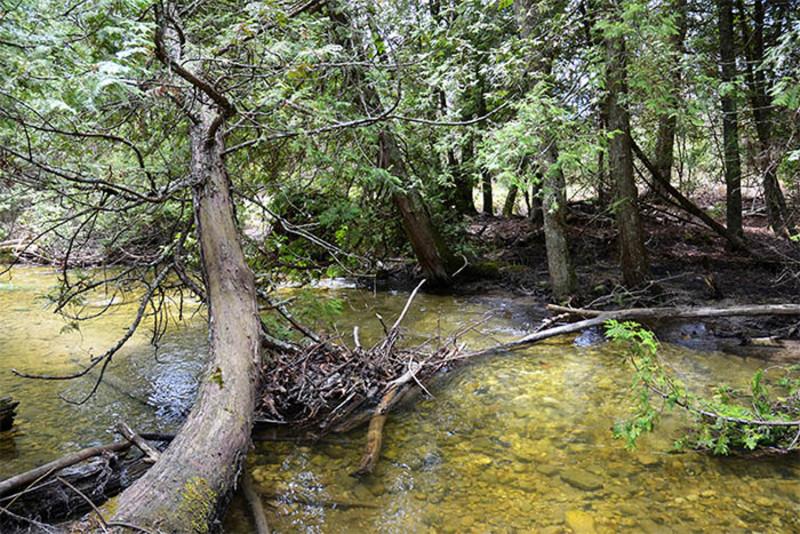 Heins Creek Nature Preserve