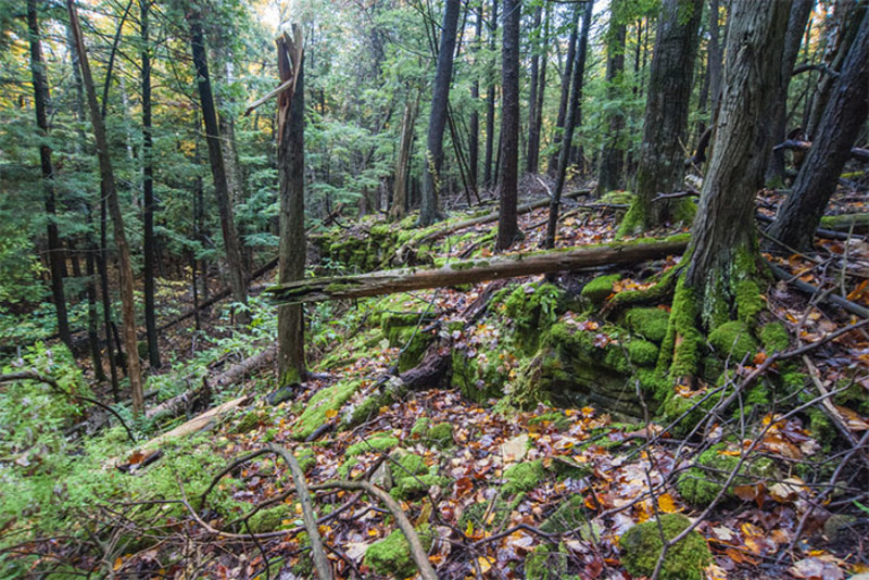 Lautenbach Woods Nature Preserve