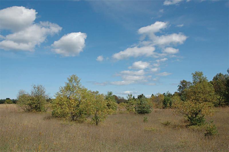 Domer-Neff Nature Preserve and Bird Sanctuary