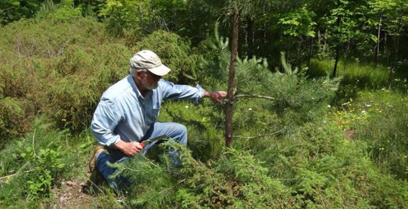 Door County Invasive Species Team