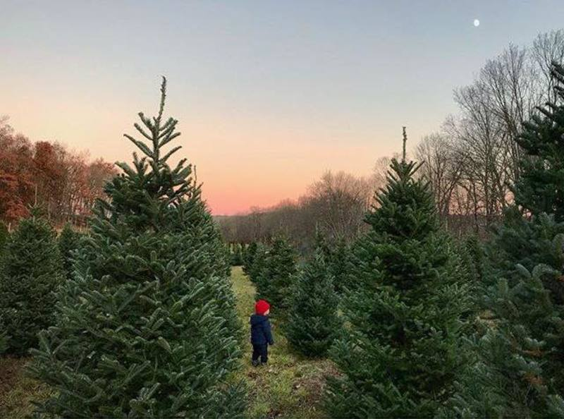 Big Rock Farms Christmas Trees