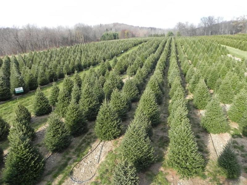 Fabulous Firs Christmas Tree Farm