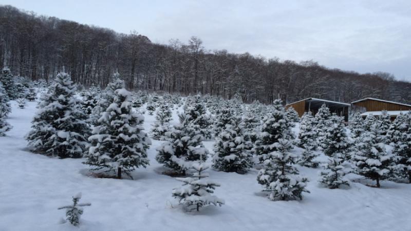 Abel Tree Farm